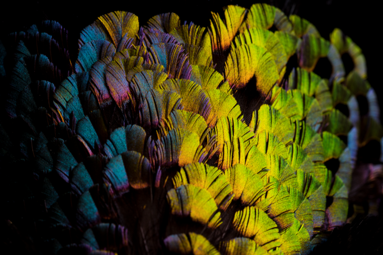 a close up view of bird feathers in yellow, green, blue, pink and purple