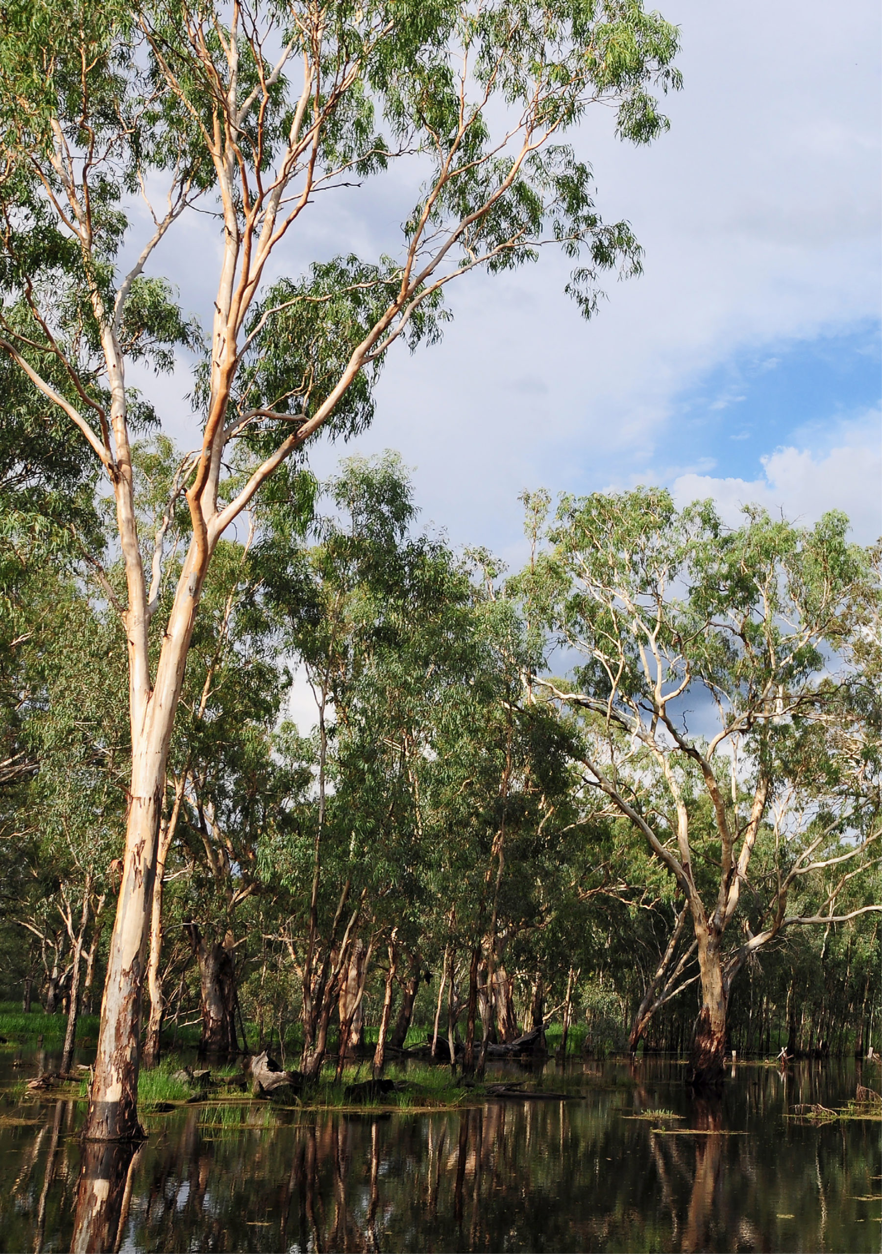 the murray darling basin - an image of the trees on the banks of the basin where you ca see the reflection of the trees on the surface of the water