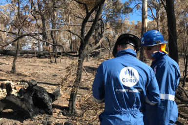 two CSIRO staff members wearing blue overalls and hard hats in the field conducting bushfire research